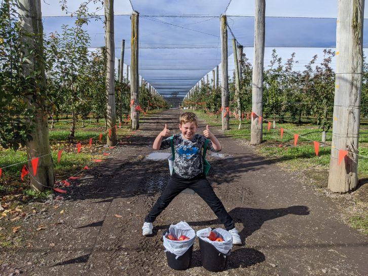 Apple picking TNT Produce