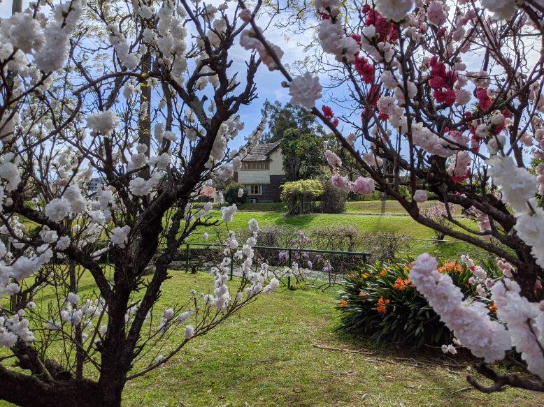 Wistaria Gardens Parramatta Park